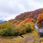 「いろは坂」観光(ドライブ・紅葉)の見どころやおすすめの時期、アクセスは?