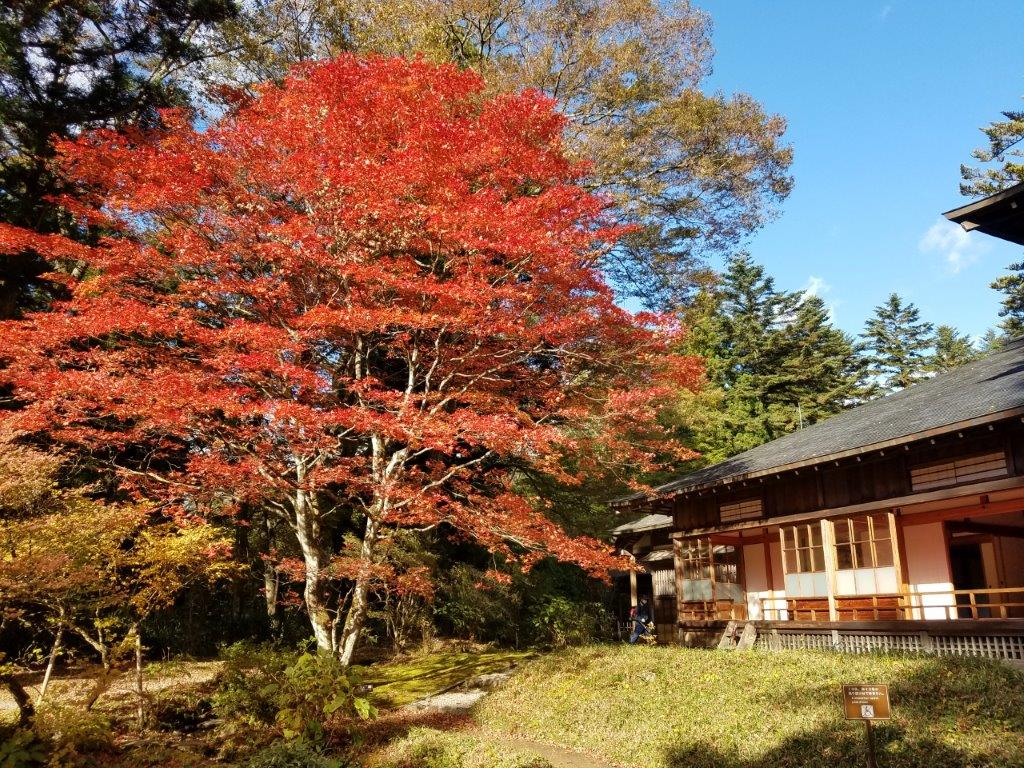 日光田母沢御用邸記念公園の紅葉
