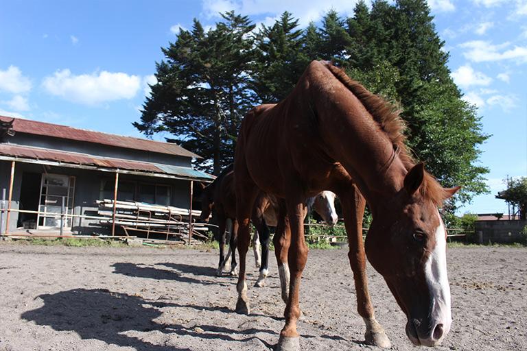 土屋乗馬クラブ 馬