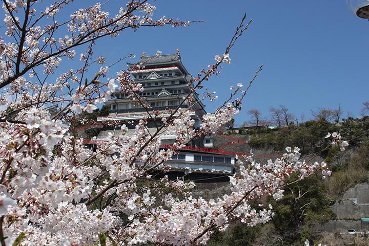 熱海城の桜