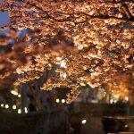 あたみ桜糸川桜祭り