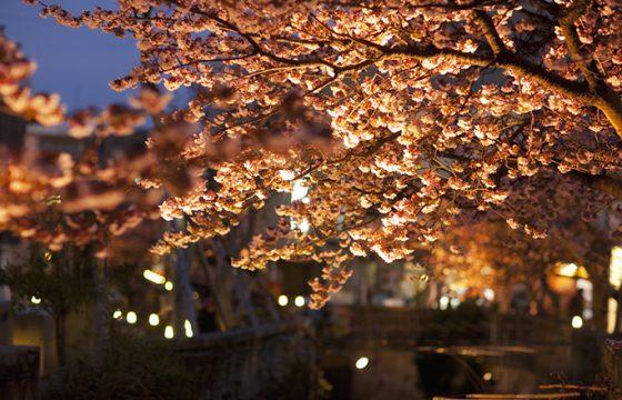 【2021年版】早咲きのあたみ桜を楽しむ!開花時期、名所を紹介