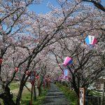 浜松の桜の開花時期、桜の名所5選を紹介
