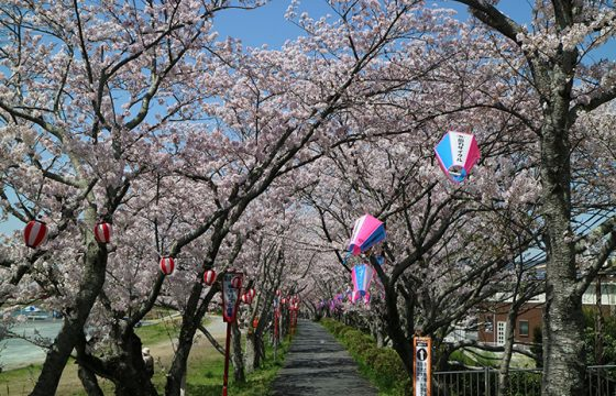 浜松の桜の開花時期、桜の名所4選をご紹介