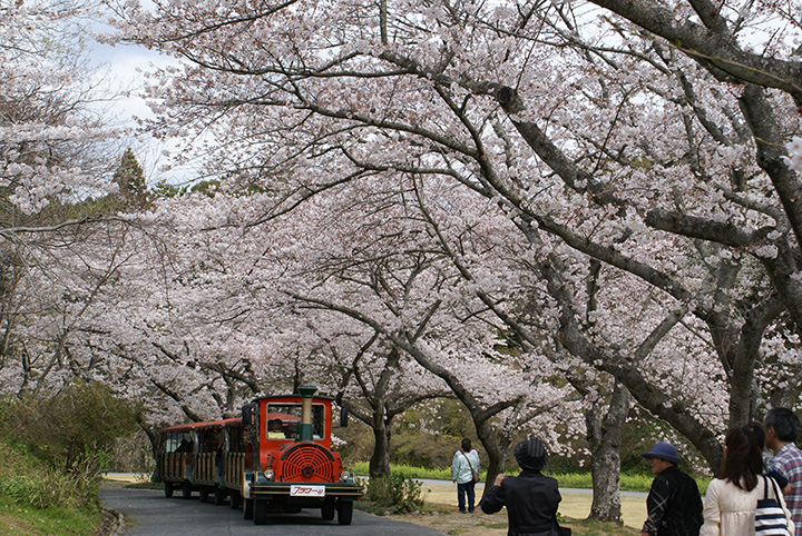 写真提供:浜松観光コンベンションビューロー