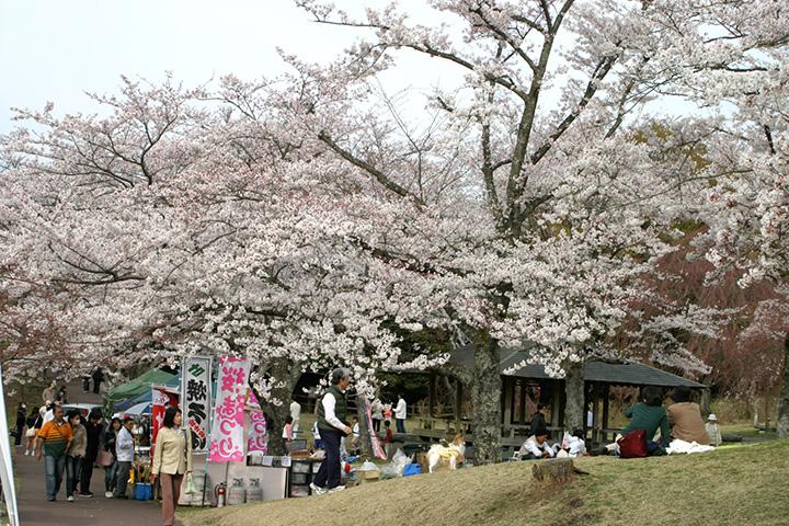 桜の里まつり
