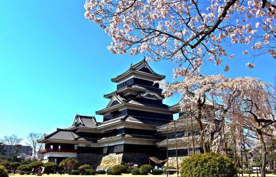 松本市内で桜を見るならここ!おすすめの名所・見頃をご紹介