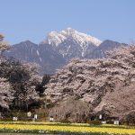 富士山を望む河口湖周辺から穴場スポットまで、山梨の桜名所を紹介