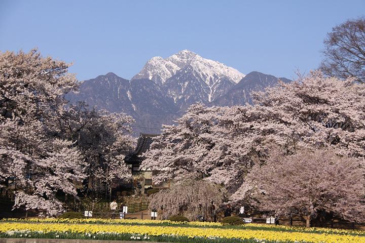 【2019年版】山梨の桜の名所、見頃をご紹介!河口湖周辺の桜から北杜市の穴場スポットまで