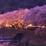 【2020年版】春の箱根を彩る桜の名所・見頃をご紹介