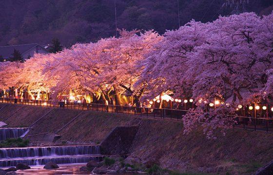 春の箱根を彩る桜の名所・見頃をご紹介