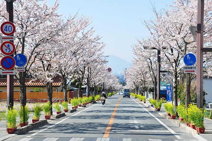武田神社と武田通り