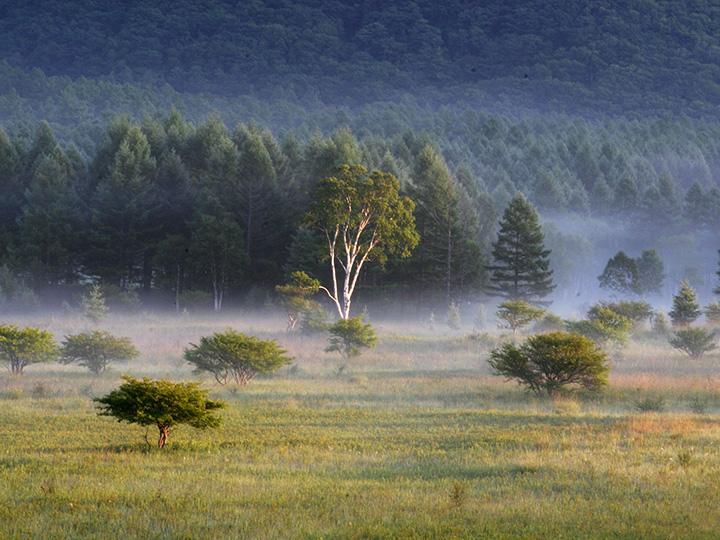 湿地から草原へ、多彩な自然が広がる小田代ヶ原