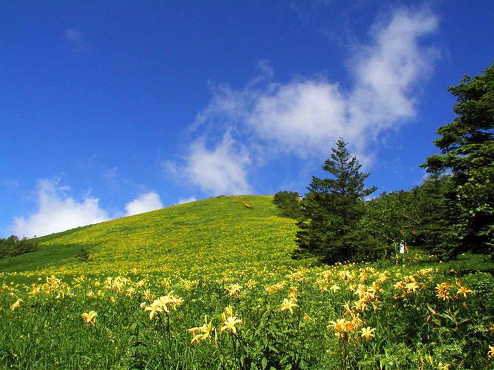 ニッコウキスゲなどの高山植物が群生する霧降高原
