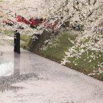 ゴールデンウィークが見ごろ!弘前城と青森の桜名所&イベント