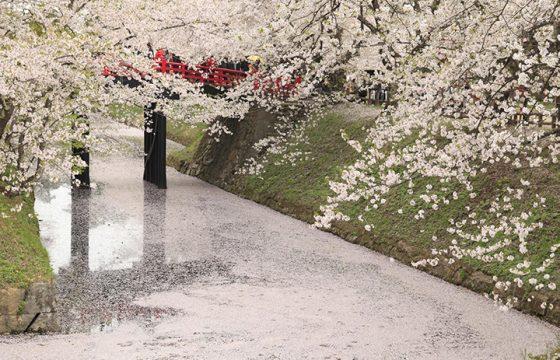 【2020年版】青森の桜はG.W.が見頃!弘前城などの花見スポット&イベントをご紹介