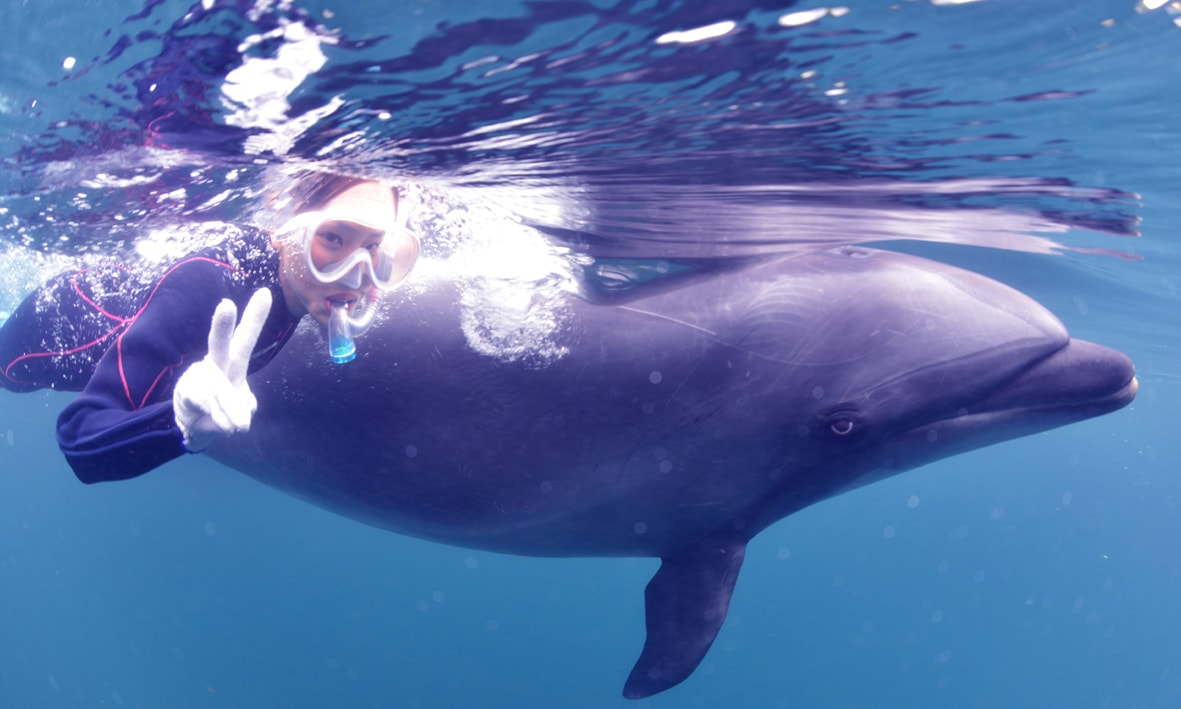 バンドウイルカと一緒に泳ぐドルフィンスイム