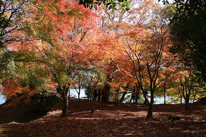 秋(9月~11月)の気温・服装について