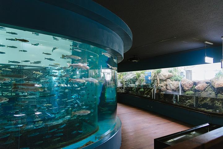 中央にある水槽は、大きい魚と小さい魚が一緒に泳いでいるように見えるよう、二重構造の工夫がされています。