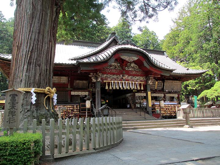 拝殿左にあるのが、県指定天然記念物第一号の冨士太郎杉