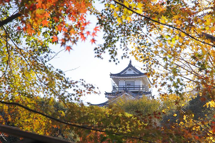 日本庭園からの秋の眺めも素晴らしい
