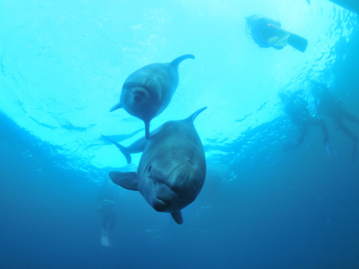 Dolphin Fantasy 伊東(ドルフィンファンタジーいとう)