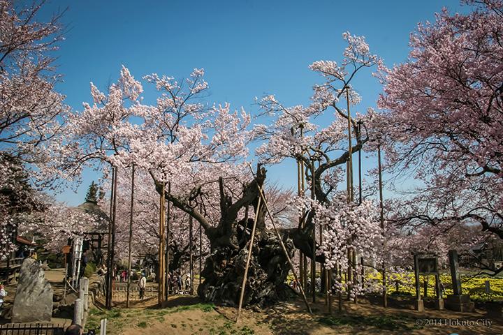 八ヶ岳(北杜市)エリアの春(3~5月)の気温・服装について