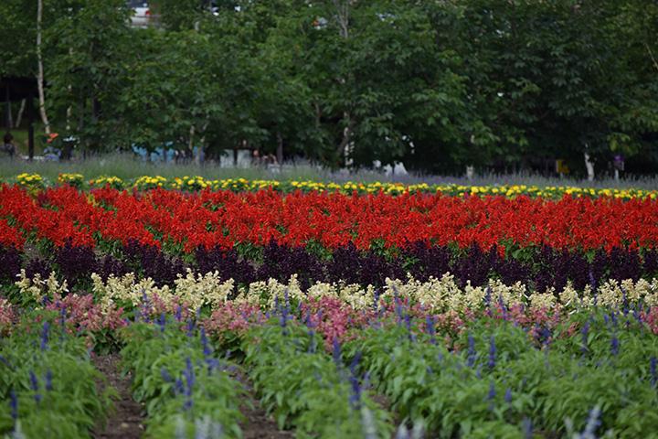 5月上旬から10月中旬まで楽しめる「花人の畑」