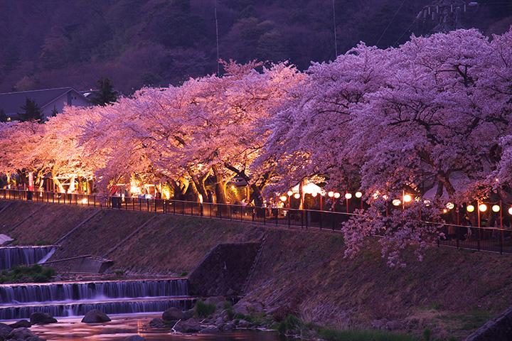宮城野の桜(写真提供:箱根町企画観光部観光課)