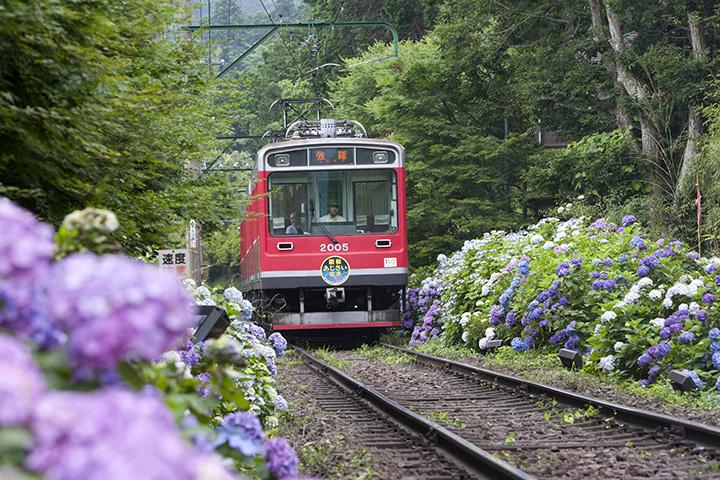 箱根登山鉄道「あじさい電車」