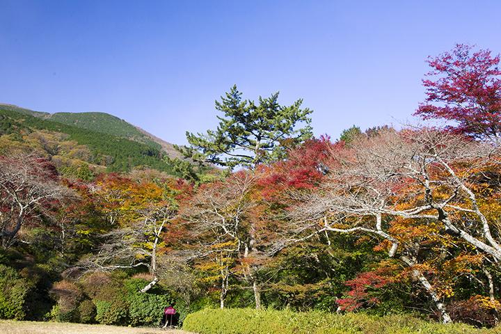 箱根小涌園 蓬莱園の紅葉