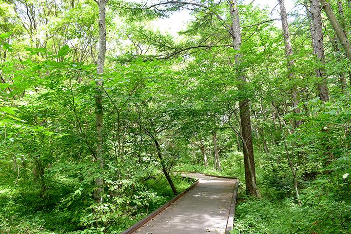 森の中の木道を歩いて深呼吸
