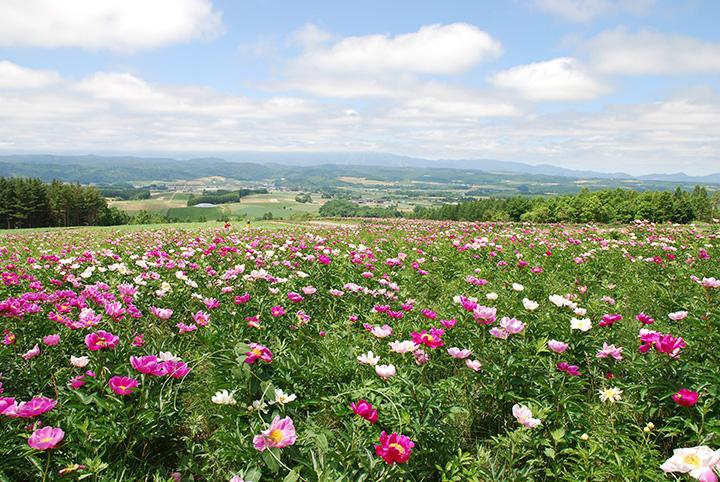 富良野の農村風景と季節の花々のパノラマ