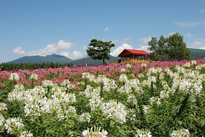 花いっぱいの丘の上に建つ展望台