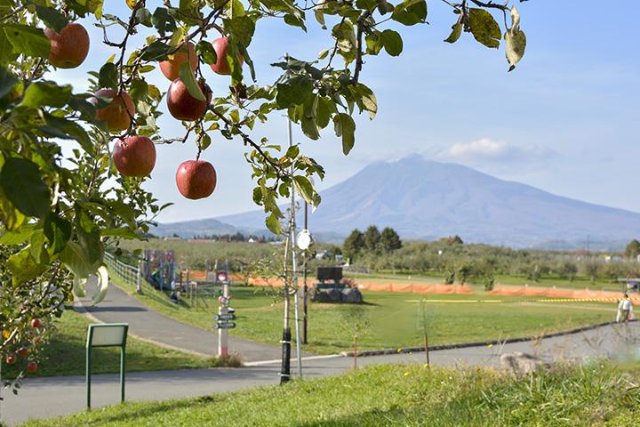 弘前市りんご公園。岩木山を背景にりんご畑が広がる