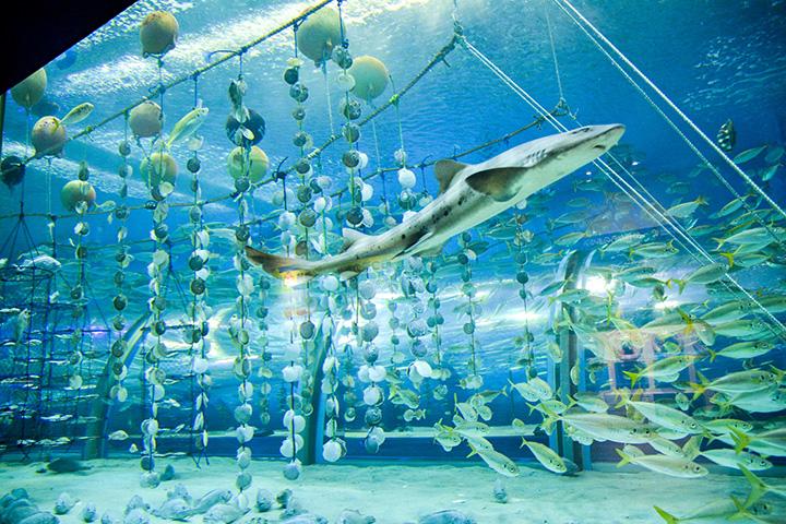 人々の暮らしと自然の共存を紹介する「むつ湾の海」