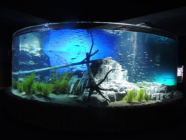 「支笏湖(しこつこ)ブルー」を再現した「支笏湖大水槽」