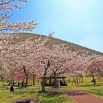 【2020年版】伊東エリアで春の花巡り。桜やツツジ、藤の名所・見頃をご紹介