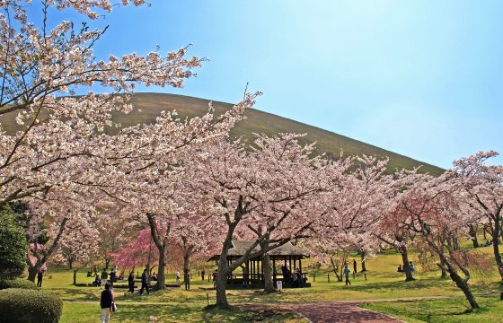 【2021年版】伊東エリアで春の花巡り。桜やツツジ、藤の名所・見頃をご紹介