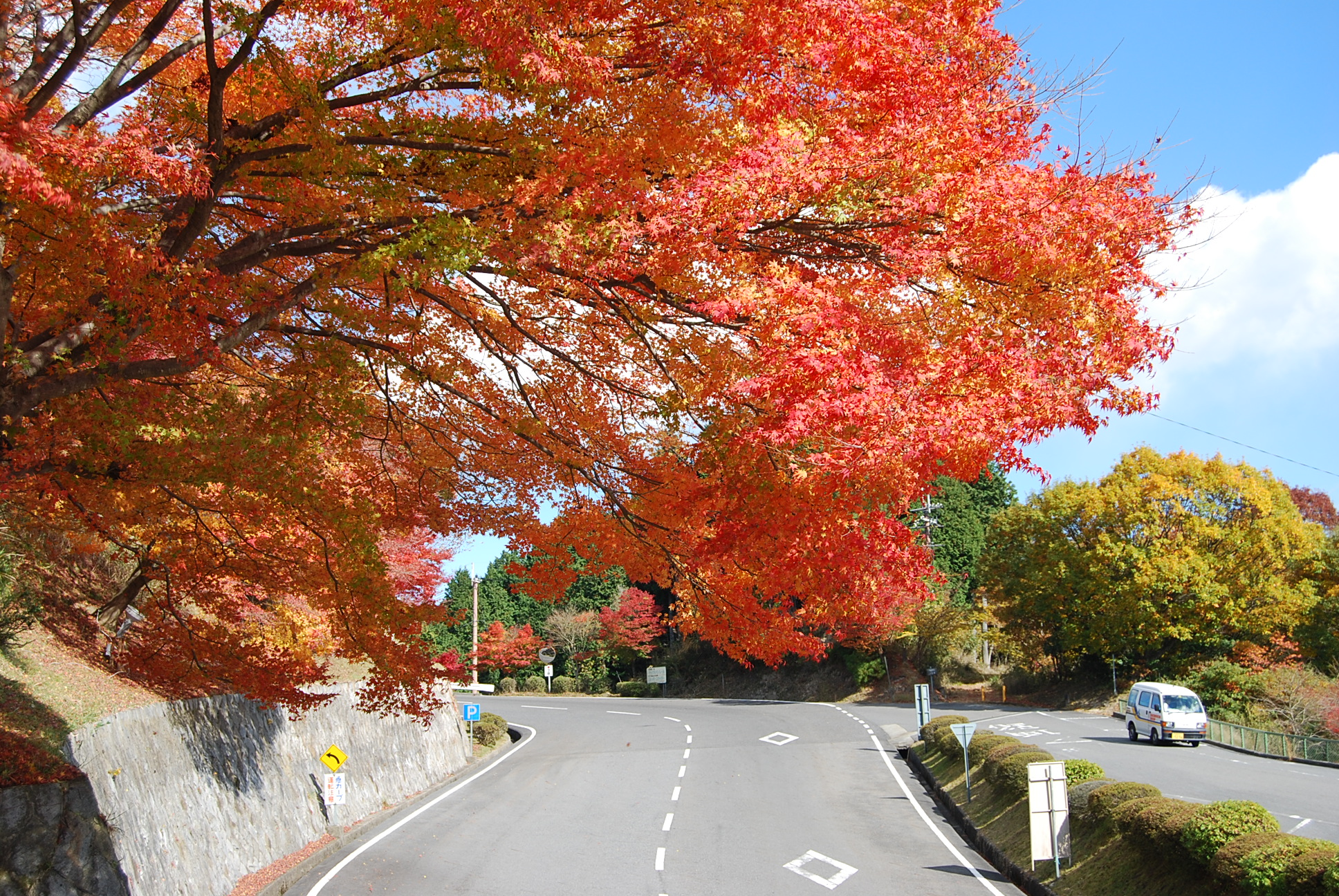 比叡山ドライブウェイの紅葉(写真:びわ湖大津観光協会)