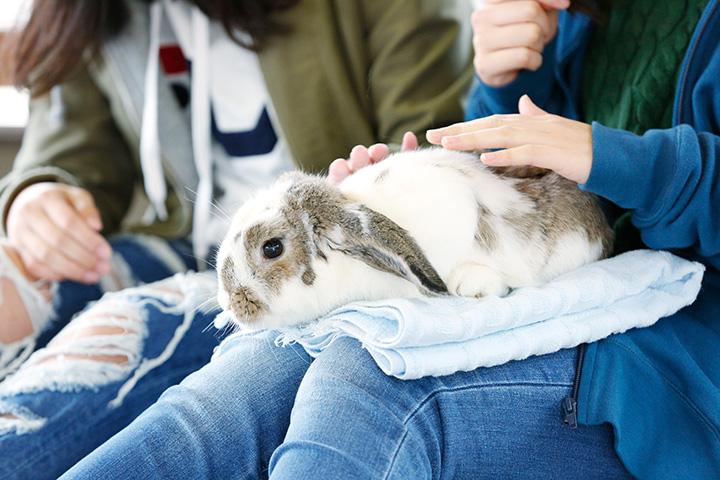 ウサギのふれあいタイムは11:30~12:00と13:30~14:00(土・日・祝~14:30)