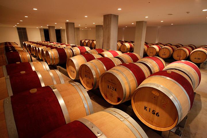 地下セラーやワイン畑は、ワイナリーツアー参加者のみが入れる見学スポット