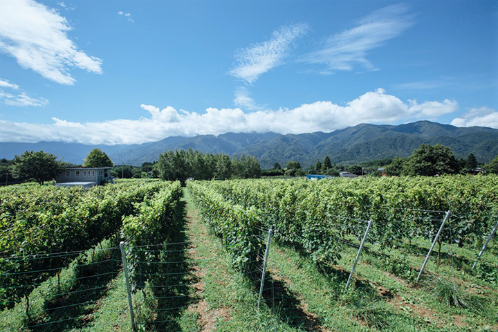 甲斐駒ヶ岳を望むのどかな場所。1haほどの畑で約2,700本のブドウを育てています
