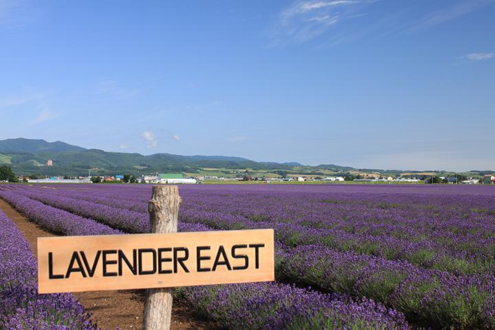 「濃紫早咲(のうしはやざき)」「おかむらさき」の2種類のラベンダーを栽培(写真提供:ファーム富田)