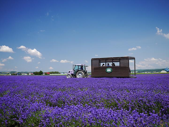 ラベンダー色のトラクターが牽引する周遊バス(写真提供:ファーム富田)