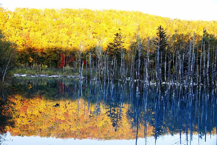 自然が生み出す神秘的な光景風のない日には池の水面に景色が映る