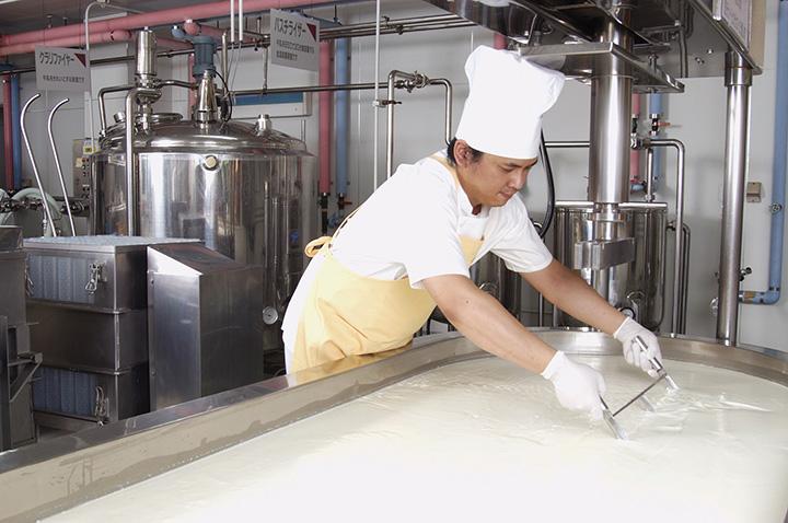チーズ製造室でチーズをカッティングする作業風景