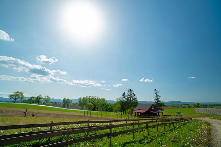 美瑛の雄大な空と大地が広がる風景は、思わず息をのむほどのスケール感
