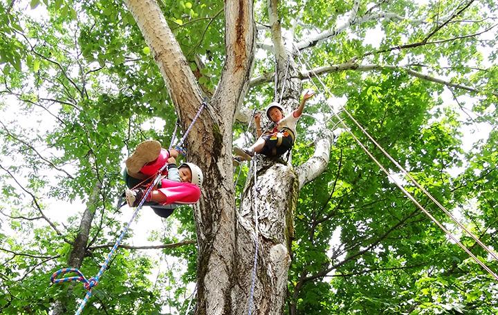 木の枝に掛けられたロープを使って登っていく