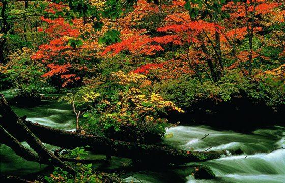【2019年版】華麗に色づく青森県の紅葉スポット9選